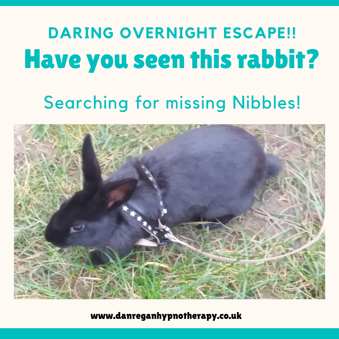 missing rabbit anxiety hypnotherapy ely